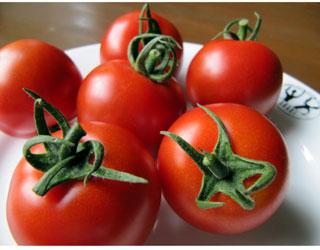 ban-tomato.jpg